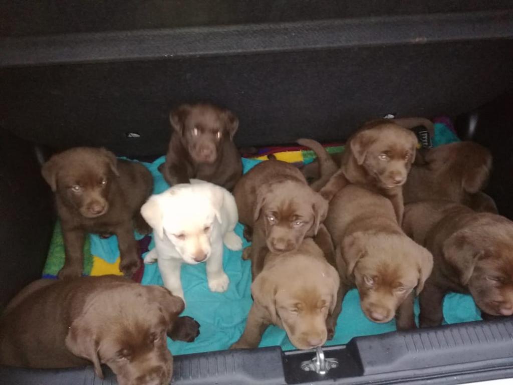 Aboheme puppies 07