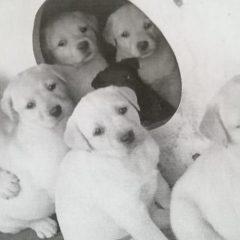 First litter puppies (3)